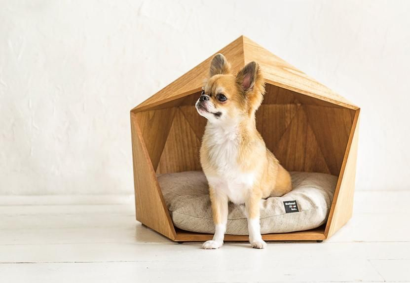 5 Pet Homes That Humans Will Envy