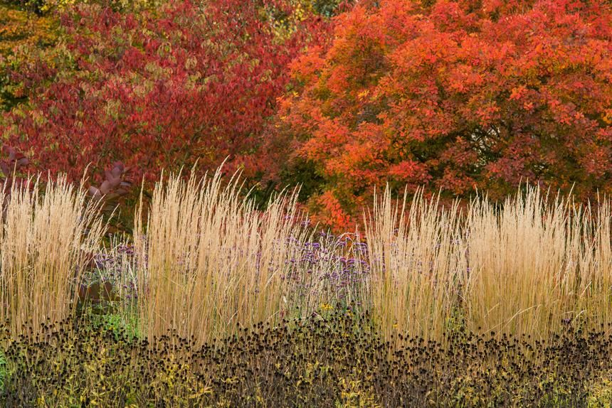 Who Needs Fall Foliage? These Ornamental Grasses Outshine It