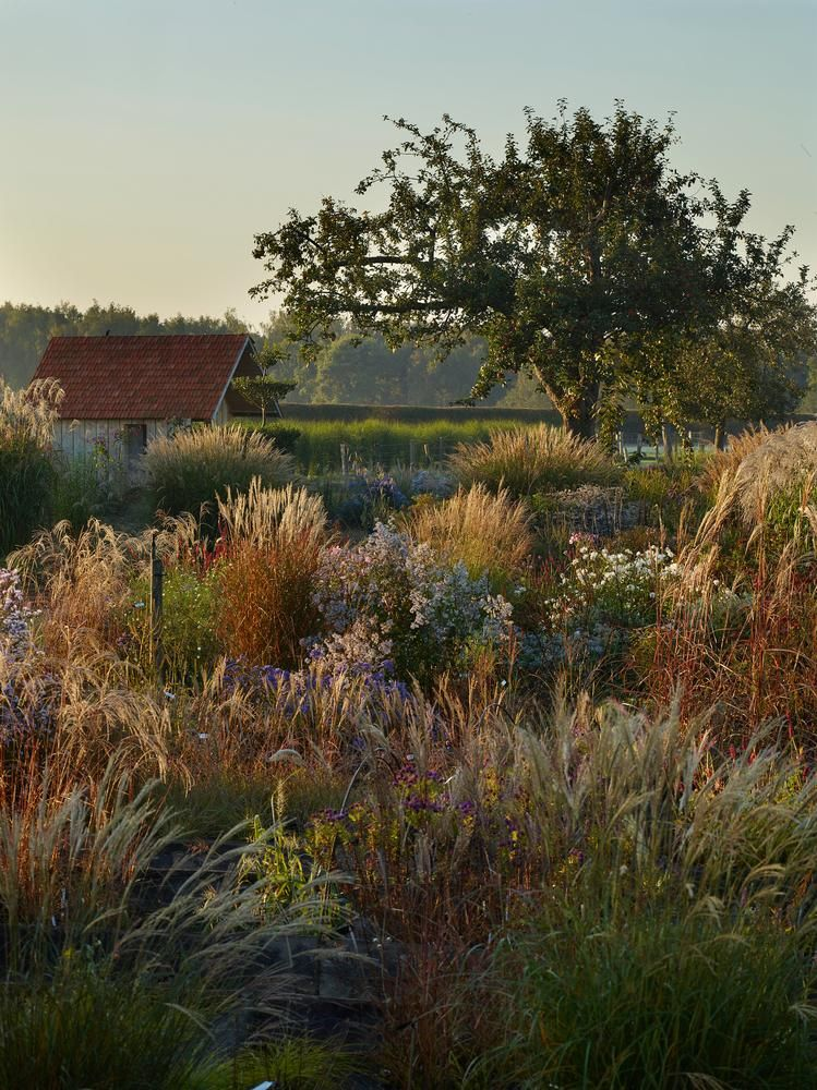 HUE KNEW? October at Le Jardin Plume, near Rouen, France. Grasses Miscanthus sinensis 'Gracillimus' and miscanthus sinensis 'Saturnia' shimmer amid anemone japonica 'Honorine Jobert' and Aster 'Little Carlow.'