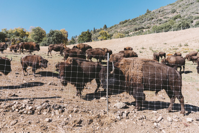 The fully-operational ranch comes with 45 buffalo; meat from the ranch is served at the steakhouse.