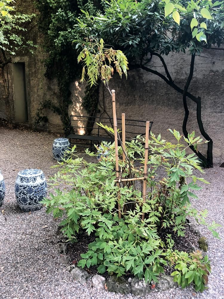 The garden at the firm's studio.