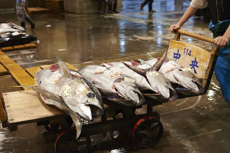 Tuna headed for auction at the Central Wholesale Market.