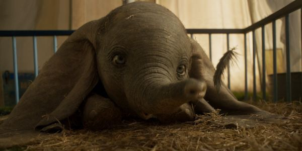 live action Dumbo with feather