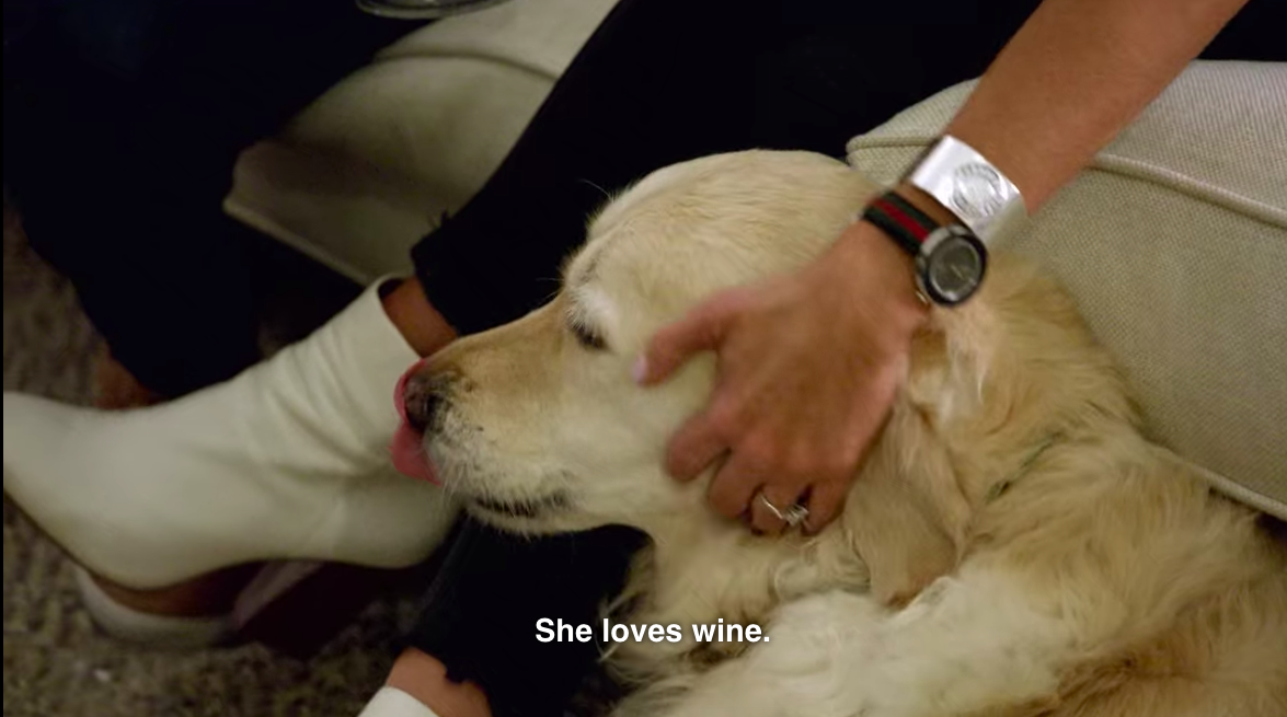 Jessica's dog on Love Is Blind