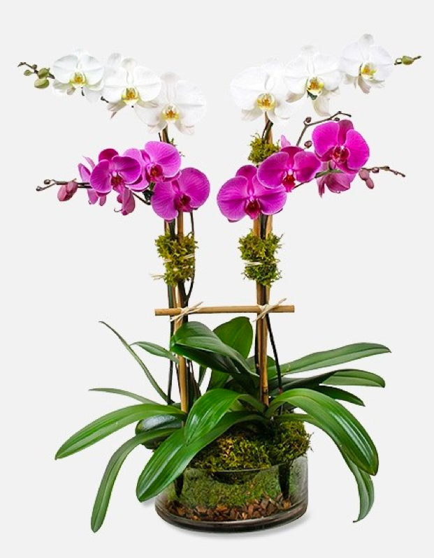 potted orchids in glass