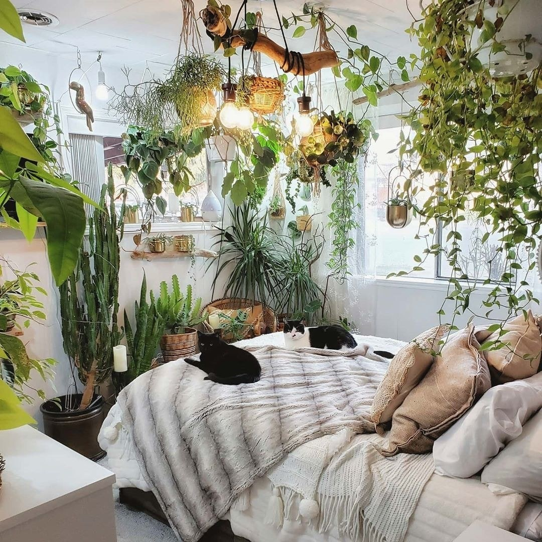 cats on a bed surrounded by hanging plants